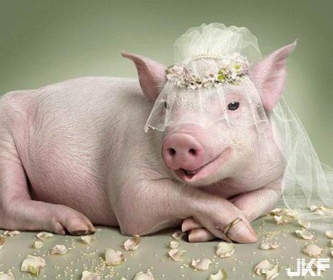 今天我就要嫁給你了.jpg
