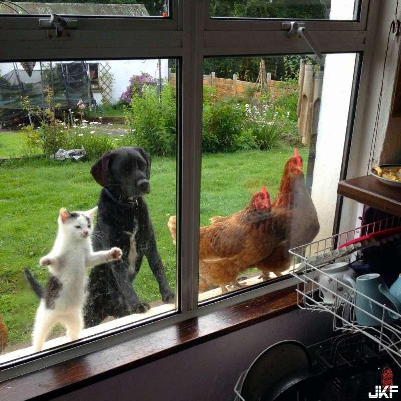 主人,你捨得讓我們看著你吃嗎.jpg