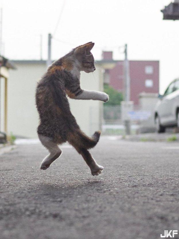 cat_fight10.jpg