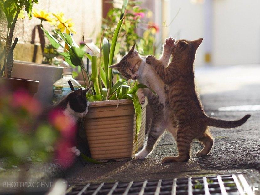 cat_fight18.jpg