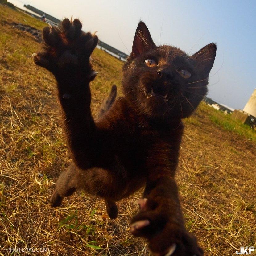 cat_fight03.jpg