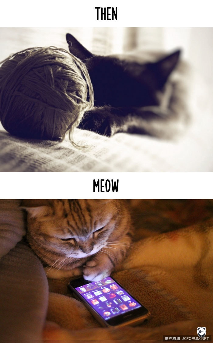 cats-then-now-funny-technology-change-life-2-5715f4cf7fd7f__700.jpg