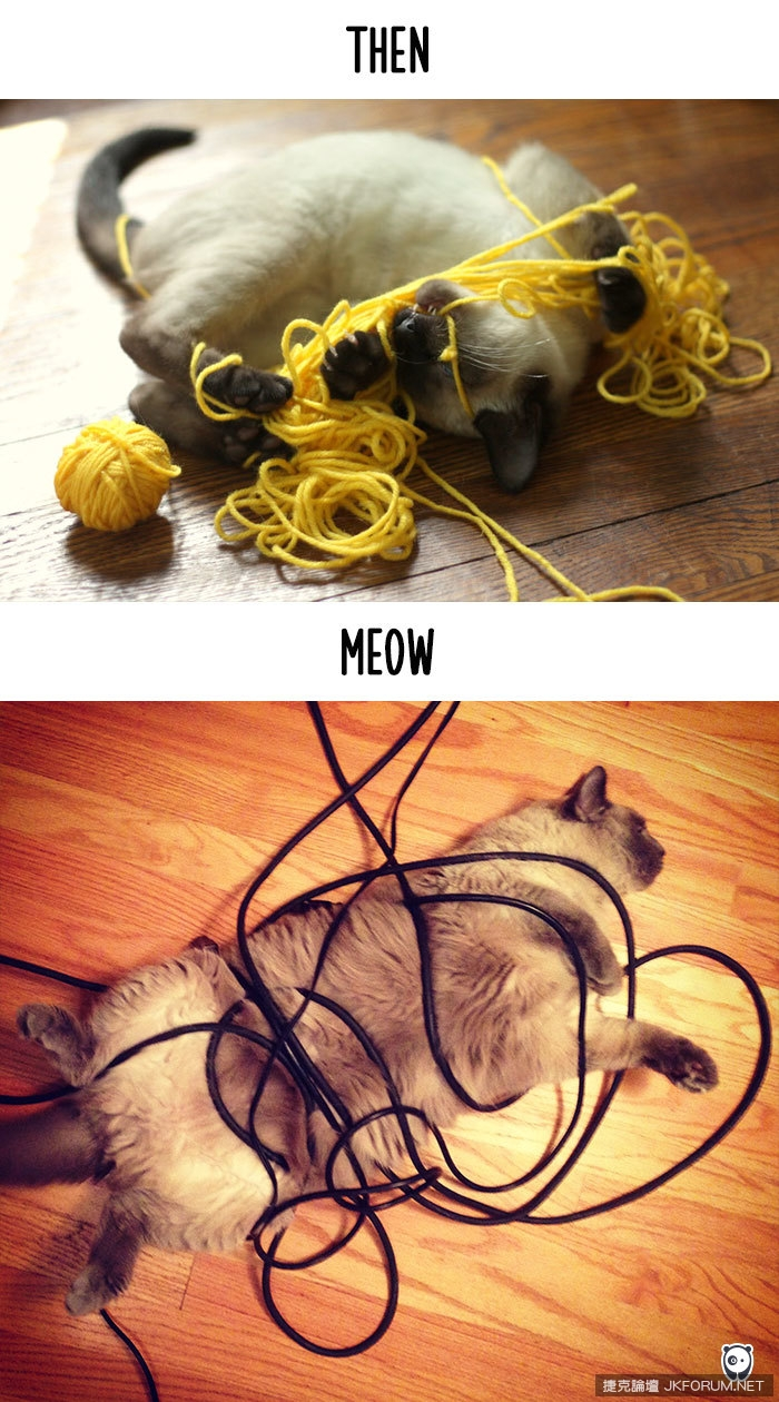 cats-then-now-funny-technology-change-life-7-571600912d6af__700.jpg