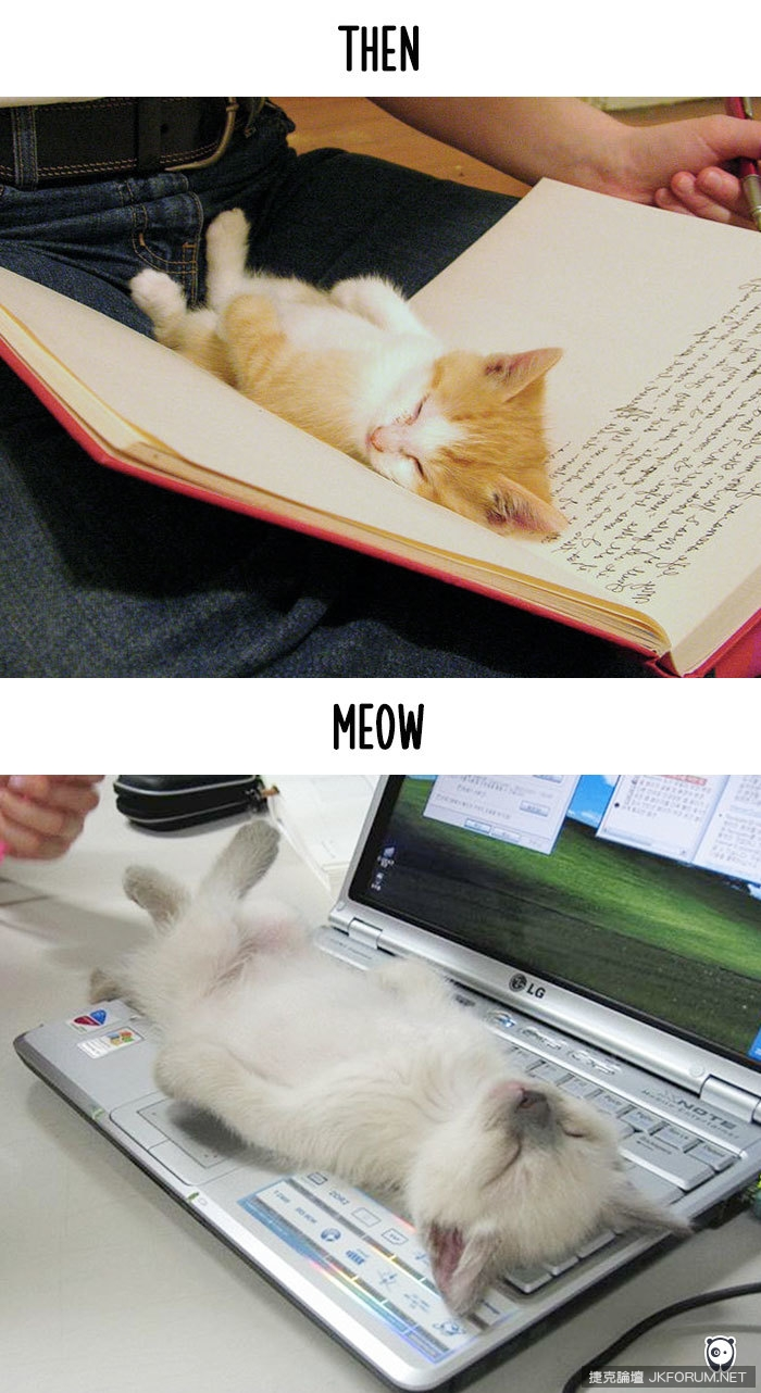 cats-then-now-funny-technology-change-life-8-571614339bfc2__700.jpg