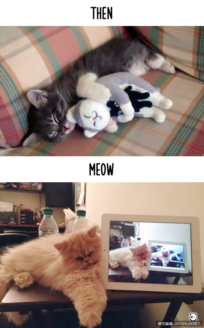 cats-then-now-funny-technology-change-life-10-57162507ede7f__700.jpg