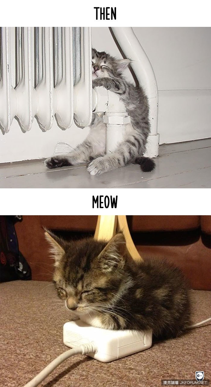cats-then-now-funny-technology-change-life-9-57161749f2b9d__700.jpg