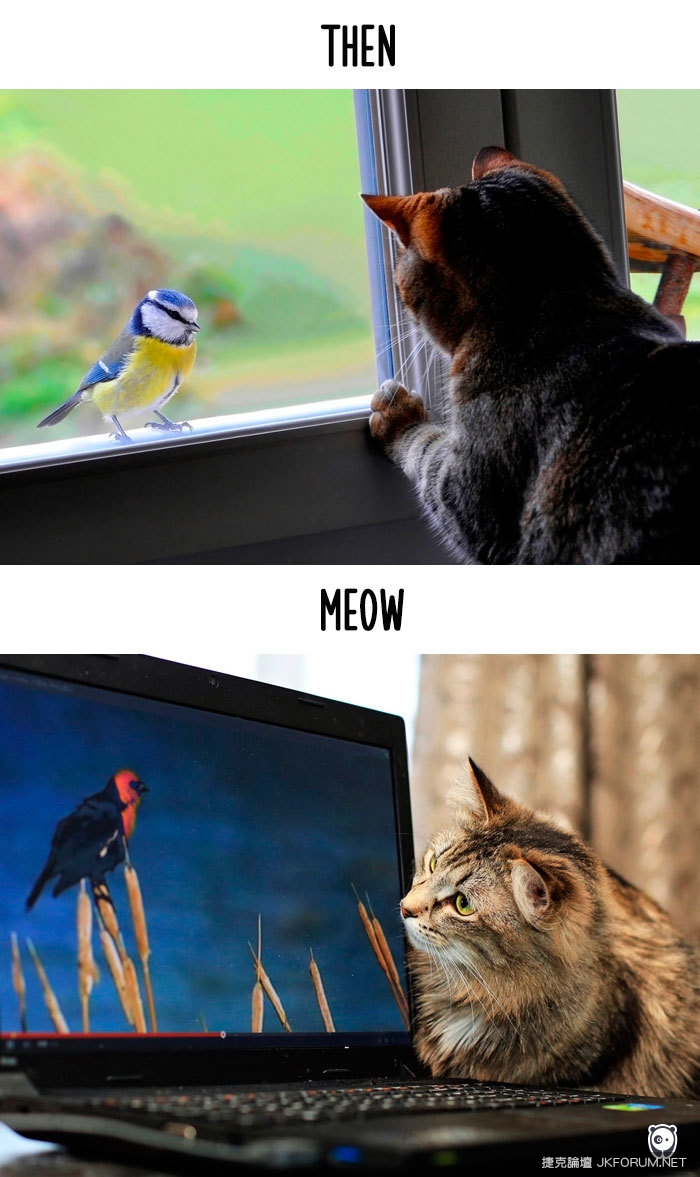 Cats-then-now-funny-technology-change-life-13-57162bb03575d__700.jpg