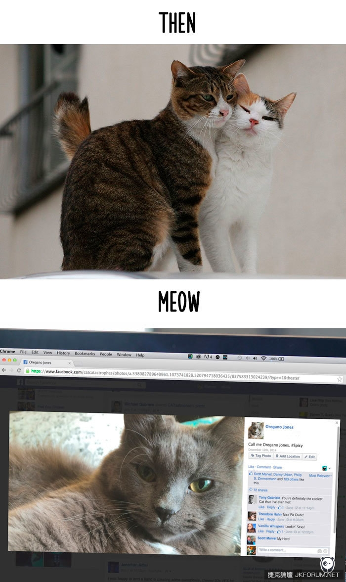Cats-then-now-funny-technology-change-life-15-5716342bb4884__700.jpg
