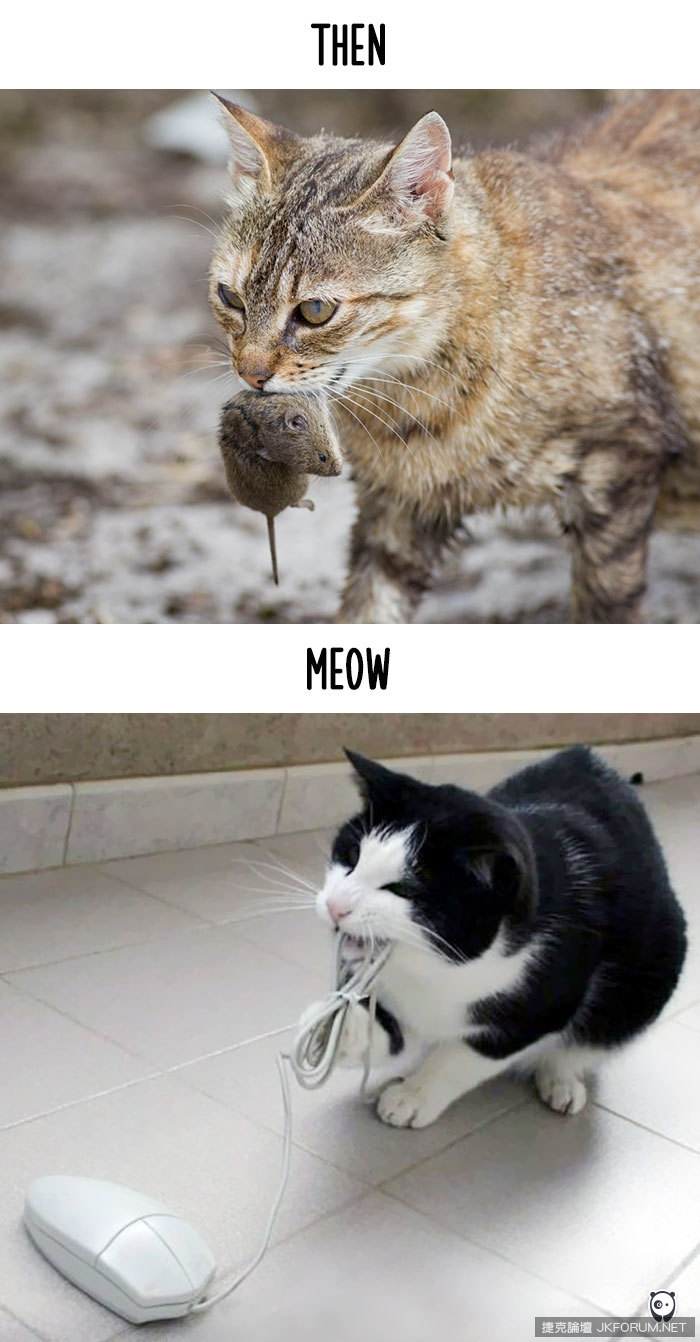 cats-then-now-funny-technology-change-life-19-571621075a8cd__700.jpg