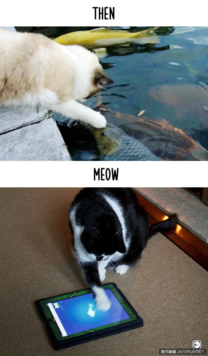 cats-then-now-funny-technology-change-life-22-5716355ec13d5__700.jpg