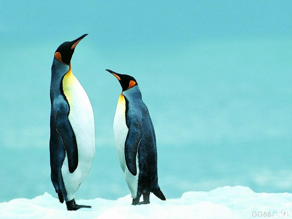 #企鵝都會抬頭向上看.jpg