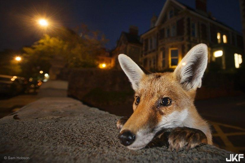 Sam-Hobson_Wildlife-Photographer-of-the-Year.jpg
