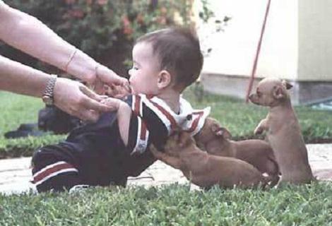 訓練有術的小狗.jpg