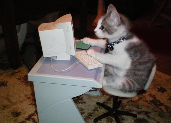 a.aaa-If-the-owner-hacker-cat-too..jpg