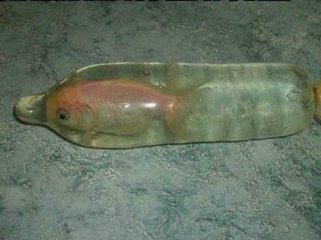 抓了條金魚,找不到裝的。.jpg