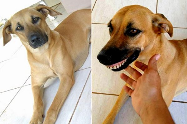 dog-has-a-silly-smile-then-the-owner-found-a-funny-fact-600x400.jpg