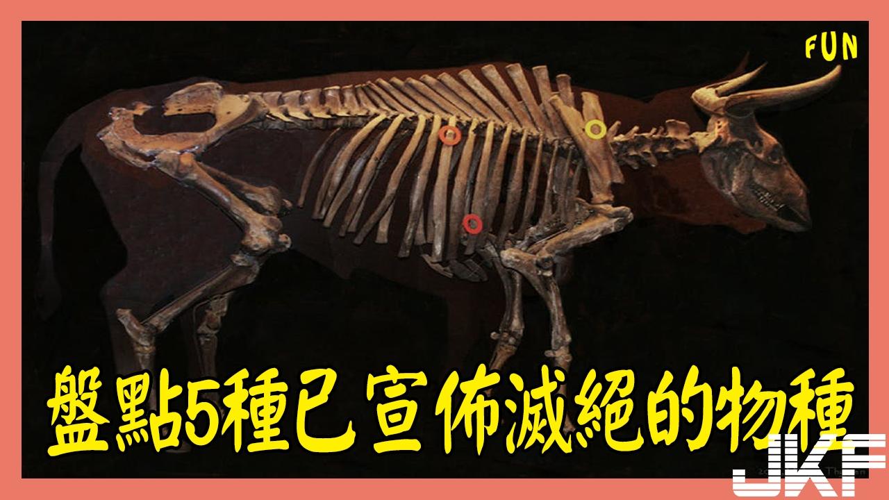盤點5種已宣佈滅絕的物種,第3種極有可能仍存在.jpg