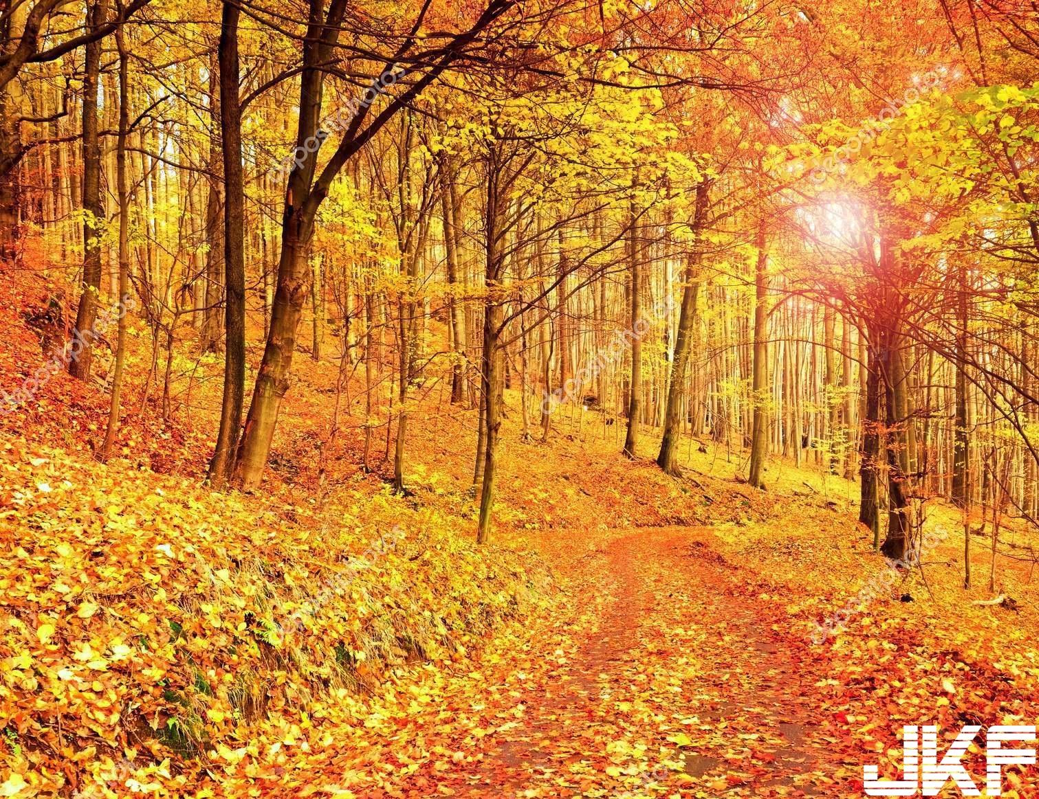 depositphotos_136455778-stock-photo-forest-road-in-autumn-autumn.jpg