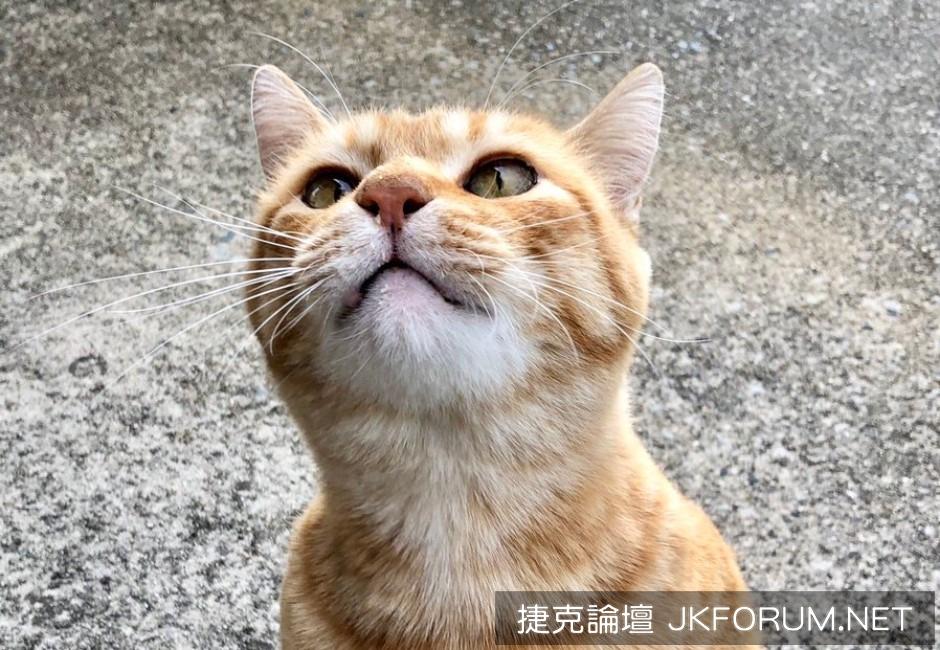 裝可愛也沒用!日本貓咪沒票想入館 保全大叔請吃閉門羹-1.jpg