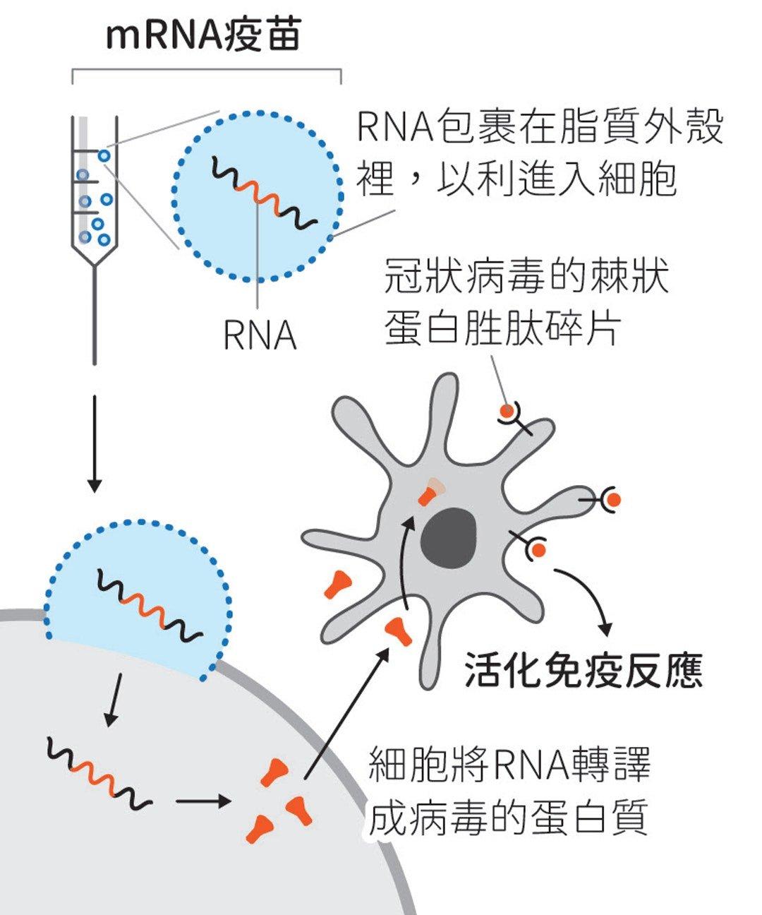 mRNA.jpg