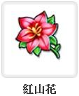紅山花.jpg
