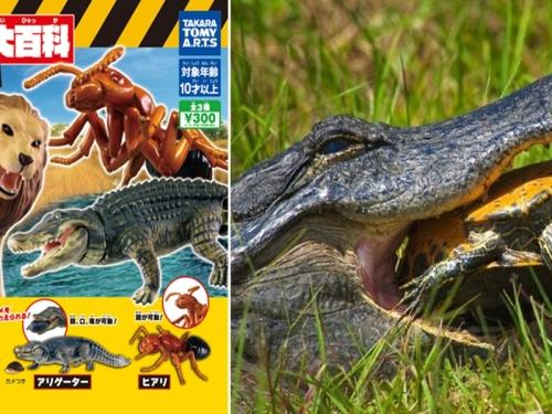 恐怖之牙!  T-ARTS推出「危險生物大百科」第3彈扭蛋系列!