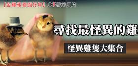 【金雞報喜過好年】尋找最怪異的雞--1/30